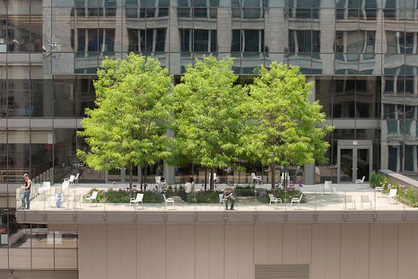 Notes On Landscape Design Morningstar S Green Roof